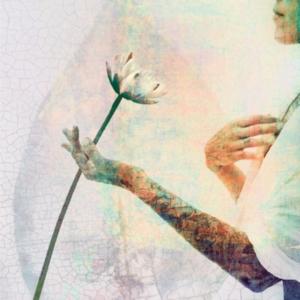 Dubbla vykort - Lotus / Näckrosen