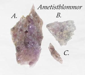 Ametistblommor