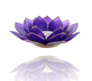 Lotuslyktan i snäckskal - Guldmetall  -Indigo - Chakra 6