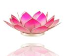 Lotuslyktan i snäckskal - Rosa