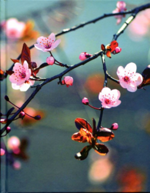 Dagbok - Cherry Blossom