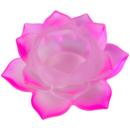 Näckros Lykta - Rosa