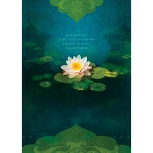 Dubbla vykort - Bouquet of Light